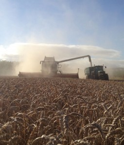 Harvesting West Lothian.